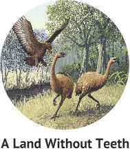 a-land-without-teeth