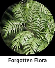 forgotten-flora