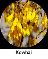 kowhai
