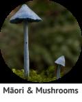 maori-mushrooms