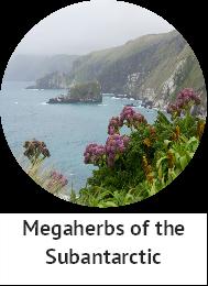 Megaherbs
