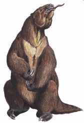 Megatherum_Groundsloth