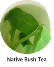 native-bush-tea