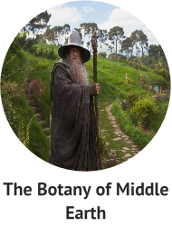 the-botany-of-middle-earth