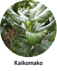 three-kings-kaikomako