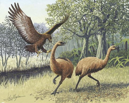 Giant_Haasts_eagle_attacking_New_Zealand_moa - John Megahan