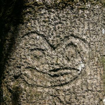 Moriori tree carving, or dendroglyph, found in the Chatham Islands.