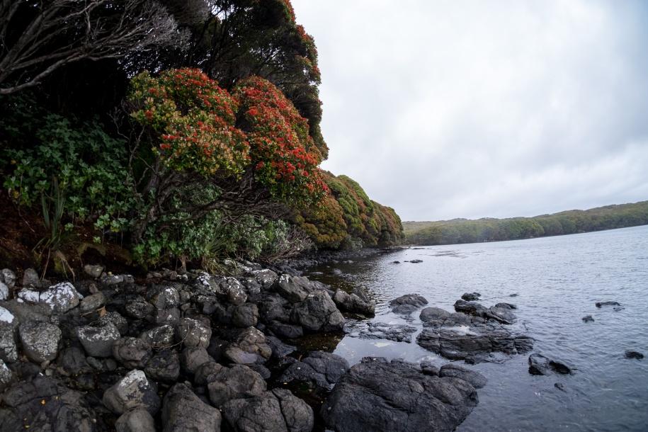 aucklandislandforest-7156