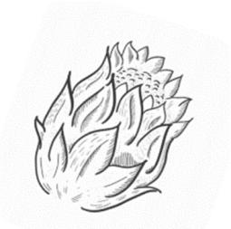 Dactylanthus - Ramina Rai