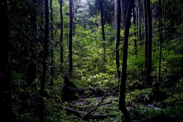 Tawa Forest - Edin Whitehead.jpg