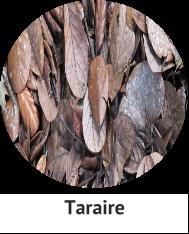 Taraire.png
